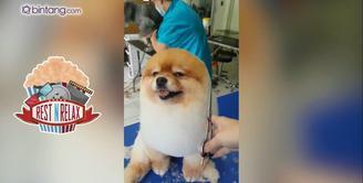 Anjing Menggemaskan Saat di Salon