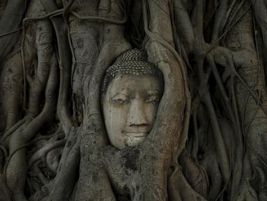 Wajah patung Buddha terlihat di antara akar pohon di kuil Wat Mahathat, Ayutthaya, Thailand (25/12/2015). Patung kepala Buddha ini telah ada sejak Kerajaan Ayutthaya runtuh akhir abad ke-18. (REUTERS/Jorge Silva)