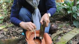 Peneliti Sofie Mursidawati mengecek jenis kelamin bunga Rafflesia Patma yang mekar di Kebun Raya Bogor, Jawa Barat, Minggu (15/9/2019). Jika cuaca sedang lembab, setiap bunga bisa mekar sempurna lebih dari tiga hari. (merdeka.com/Arie Basuki)