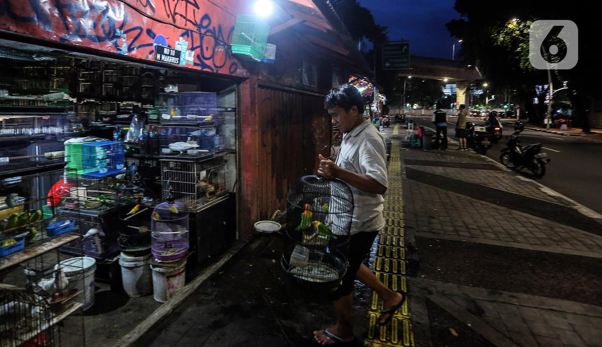 Pedagang merapikan dagangannya saat menutup toko di Pasar Hewan Barito, Jakarta, Senin (8/3/2021). Pedagang di pasar yang menjual aneka hewan peliharaan itu mengalami penurunan omset selama pandemi, meski demikian mereka mengaku tetap bersyukur masih diizinkan berjualan. (Liputan6.com/JohanTallo)