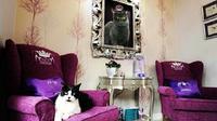 Hotel mewah untuk kucing, The Ings Luxury Cat Hotel, Inggris. ((dok. Instagram @glits_mx/https://www.instagram.com/p/mlKaVfjXsP//Adhita Diansyavira))