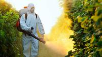 Ilustrasi Pestisida (iStock)