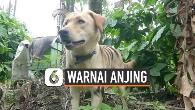 vertical warnai anjing