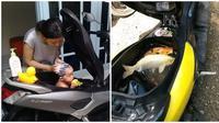 Fungsi Bagasi Motor Ini Bikin Geleng-geleng (sumber:Instagram/@awreceh.id)