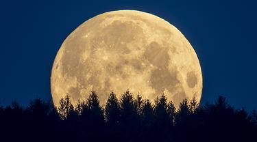 Bulan purnama terlihat di wilayah Taunus, Frankfurt, Jerman, Kamis (7/5/2020). Fenomena supermoon atau di belahan Bumi lain disebut flower moon ini merupakan yang terakhir di tahun 2020. (AP Photo/Michael Probst)