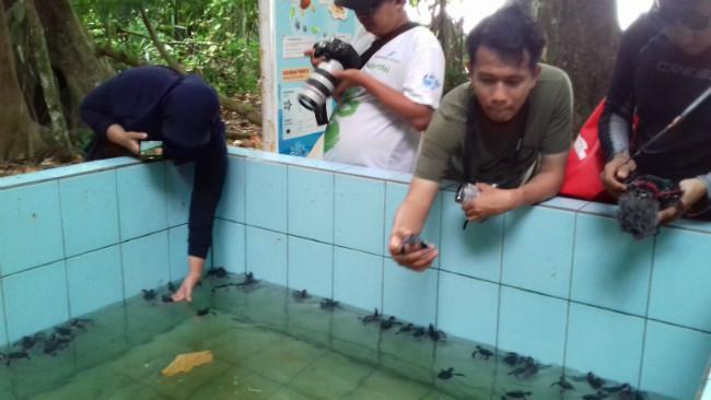 Penangkaran penyu di Pulau Sangalaki, Kepulauan Derawan, Kalimantan Timur. (Liputan6.com/Ramdania El Hida)