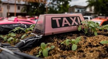 Atap taksi berubah jadi kebun sayur di Thailand