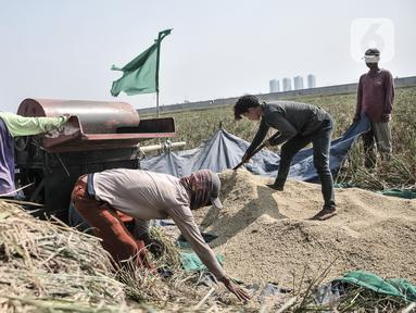 Aktivitas petani saat menggiling padi usai dipanen di persawahan kawasan Rorotan, Jakarta, Rabu (29/7/2020). Direktur Utama Perum Bulog Budi Waseso mengatakan cadangan beras pemerintah (CBP) mencapai 1,4 juta ton beras. (merdeka.com/Iqbal S. Nugroho)