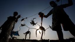 Nelayan Palestina mengenakan masker saat mereka melepaskan kepiting dari jaring di pantai laut Mediterania di Beit Lahyia, Jalur Gaza utara pada 21 September 2020. (AP Photo / Hatem Moussa)