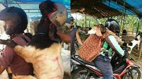 Aksi orang-orang saat bawa hewan kurban dengan motor, kocak! (Sumber: Twitter/@animalfess2)