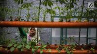 Petugas mengecek kondisi bibit bunga di Balkot Farm yang terletak di Balai Kota DKI Jakarta, Senin (16/9/2019). Balkot Farm menjadi percontohan upaya memanfaatkan keterbatasan lahan di area perkantoran untuk mengaplikasikan urban farming atau pertanian perkotaan. (Liputan6.com/Faizal Fanani)