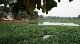 Kondisi Setu Pengarengan yang dipenuhi eceng gondok di Depok, Jawa Barat, Rabu (14/8/2019). Kurangnya perhatian pihak terkait menyebabkan setu semakin banyak ditumbuhi tanaman eceng gondok, bahkan hampir menutupi seluruh permukaan air. (Liputan6.com/Immanuel Antonius)