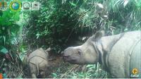 Penampakan anak badak jawa jantan bernama Luther di Taman Nasional Ujung Kulon. (dok. Balai TN Ujung Kulon, KLHK/Dinny Mutiah)