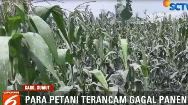 Petani berharap adanya bantuan pemerintah karena mayoritas warga selama ini menggantungkan hidup dengan bertani.