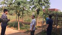 Hasil pupuk organik di Aceh