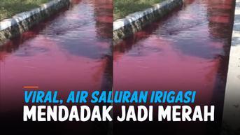 VIDEO: Heboh, Air Saluran Irigasi di Klaten Mendadak Jadi Merah