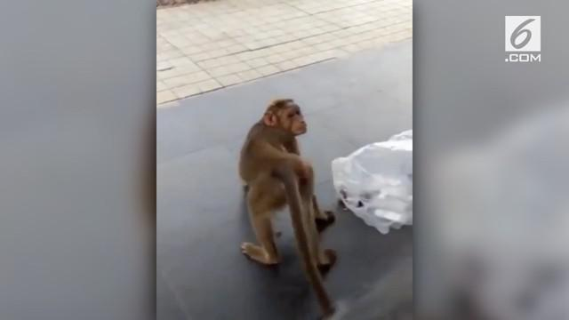 Ada-ada saja yang dilakukan monyet ini ketika seekor anjing terus menggonggong ke arahnya. Monyet itu malah meledek anjing. Lihat deh videonya!