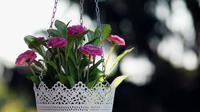 Berikut enam manfaat menaruh tanaman hijau di dalam rumah untuk kesehatan.