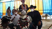 Kontes ternak domba Garut di tengah pandemi covid-19 dinilai tepat untuk menggairahkan perekonomian kalangan peternak domba Garut saat ini. (Liputan6.com/Jayadi Supriadin)