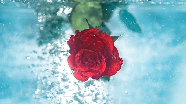 6 Manfaat Bunga Mawar Untuk Wajah Kulit Semakin Cantik Hot Liputan6 Com