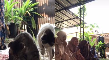 Kelewat Iseng, Tingkah Absurd Kucing Ini Bikin Gagal Fokus Saat Sholat Ied