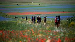 Wisatawan berjalan di tengah-tengah bunga mekar dan ladang lentil di Castelluccio, sebuah desa kecil di wilayah Umbria, Italia tengah pada 6 Juli 2020. (Tiziana FABI / AFP)