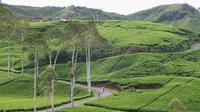 Pemerintah menyebutkan jalan tol Trans Jawa  memberikan kenyamanan mobilitas wisatawan  menuju ke 224 destinasi wisata.