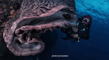 Salvador Dali atau Sponge Coral yang ada di bawah Taman laut Olele Bonebol Foto: Mr. Koesbee (Liputan6.com/Arfandi Ibrahim)