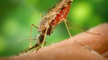 Trik Terhindar Malaria Sebelum ke Papua