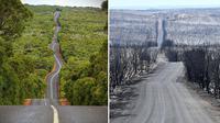 Sebelum dan Sesudah Kebakaran di Australia (Sumber: Boredpanda)