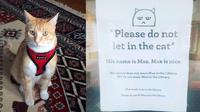 Karena suka main ke perpustakaan, kucing ini diberi tanda bahwa dia dilarang masuk. Berkat tanda tersebut kucing ini menjadi terkenal.