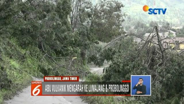 Tumbuhan dan hewan dikawasan Taman Nasional Bromo Tengger Semeru terganggu ekosistemnya akibat erupsi Gunung Bromo.