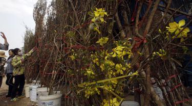 Pedagang menyiapkan pohon bunga kuning untuk dijual di toko pinggir jalan di Phnom Penh, Kamboja (8/2/2021).  Bunga kuning banyak digunakan masyarakat Tionghoa yang tinggal di Kamboja untuk merayakan Imlek. (AP Photo/Heng Sinith)