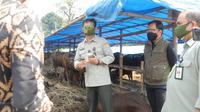 Menteri Pertanian (Mentan) Syahrul Yasin Limpo bersama Walikota Bogor mengunjungi depo 1000 sapi kurban di Jalan Soleh Iskandar, Tanah Sereal, Kota Bogor, Jawa Barat.