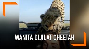 Seorang wanita dijilat cheetah di Serengeti National Park, Afrika. Saat itu ia tengah bersafari dengan sang suami.