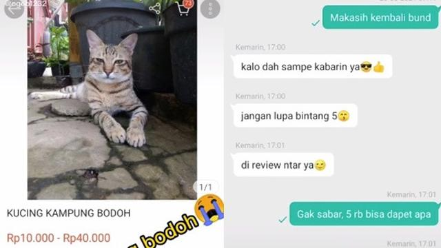 Viral Netizen Beli Kucing Rp 5 Ribu Yang Datang Di Luar Dugaan Hot Liputan6 Com