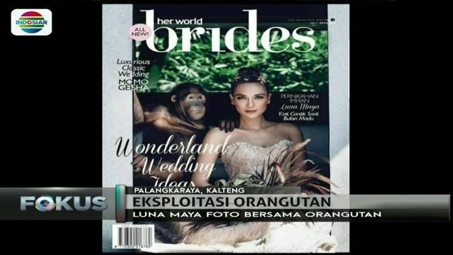 Dinilai telah mengeksploitasi satwa dilindungi, pose Luna Maya di suatu majalah menuai kecaman dari komunitas pecinta orangutan.
