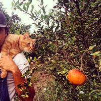 Potret Jason Mraz yang diambil saat berpose bersama dengan kucing di kebun ini bikin gemas banget, ya! (instagram/jason_mraz)