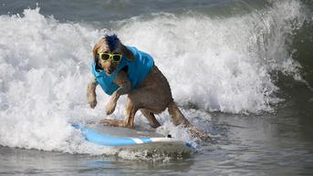 FOTO: Aksi Menggemaskan Anjing Taklukkan Ombak di California