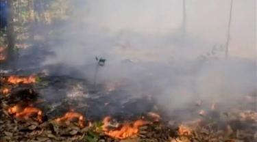 Tim Satgas Karhutla: Kebakaran Hutan dan Lahan di Riau Disengaja