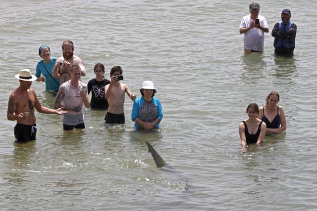 Orang-orang dengan ponsel merekam hiu yang berenang melewati perairan Laut Mediterania yang dangkal di lepas pantai kota Hadera di utara Tel Aviv, Israel, Selasa (20/4/2021). Fenomena yang menjadi perhatian warga ini diduga akibat suhu air laut Mediterania berubah menjadi hangat. (JACK GUEZ/AFP)