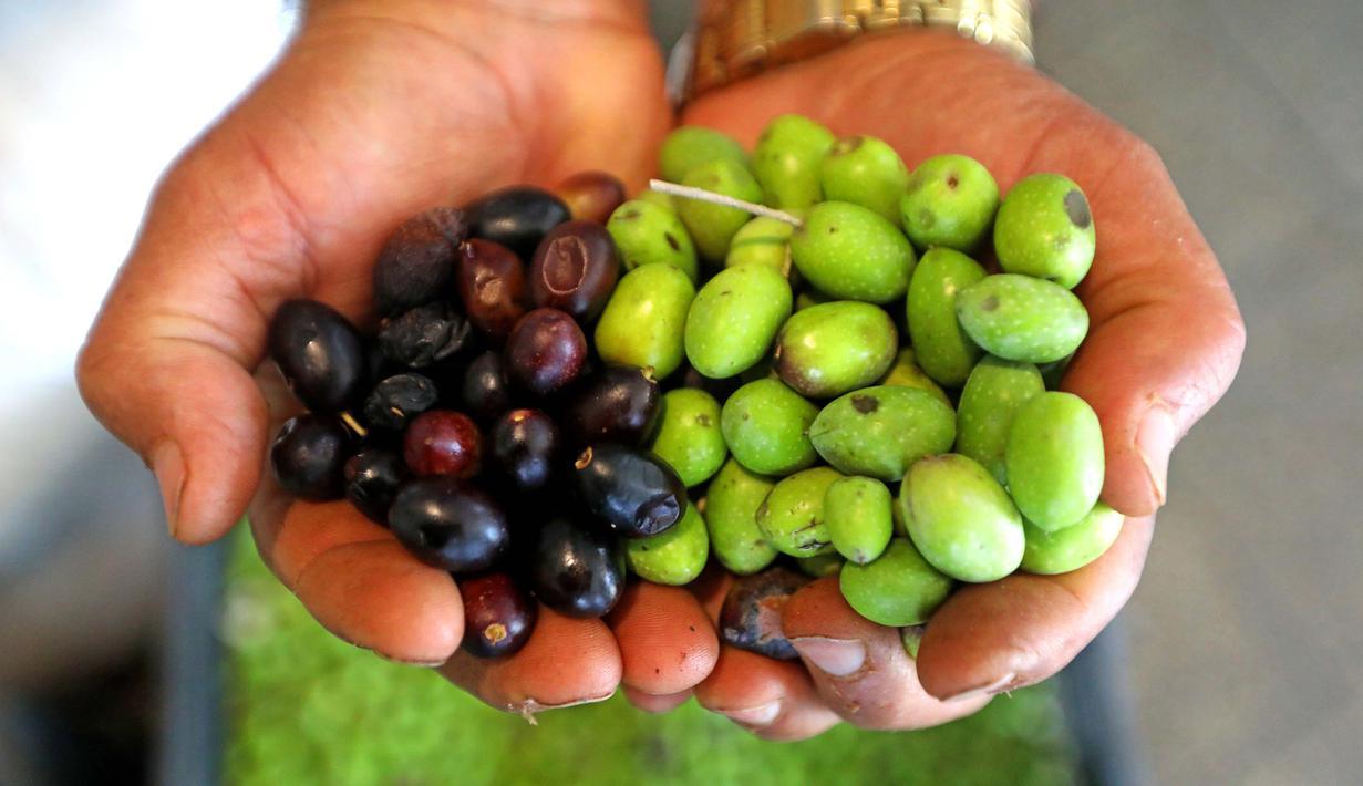 Buah zaitun yang baru dipetik terlihat di sebuah pabrik pengolahan minyak zaitun di Borj Qalaouiye, Lebanon selatan, pada 18 Oktober 2020. Beberapa wilayah di Lebanon selatan masih menggunakan cara-cara tradisional untuk mengekstraksi minyak dari buah zaitun. (Xinhua/Bilal Jawich)
