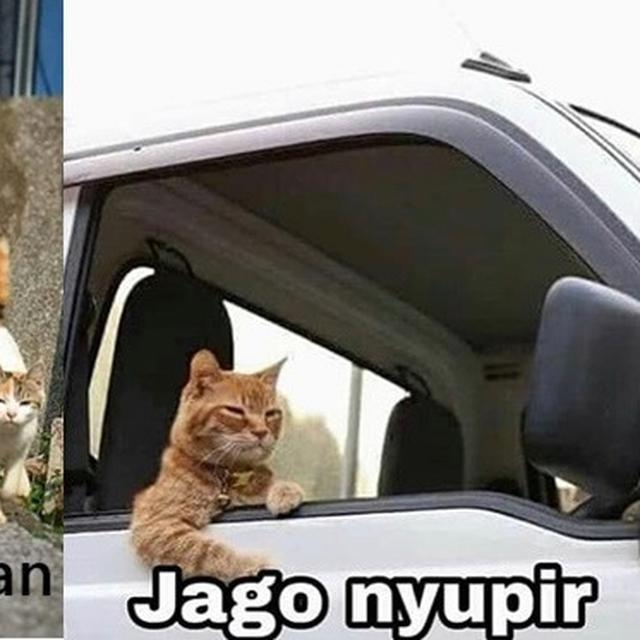 6 Meme Kucing Oranye Yang Bar Bar Ini Kocaknya Bikin Ngakak