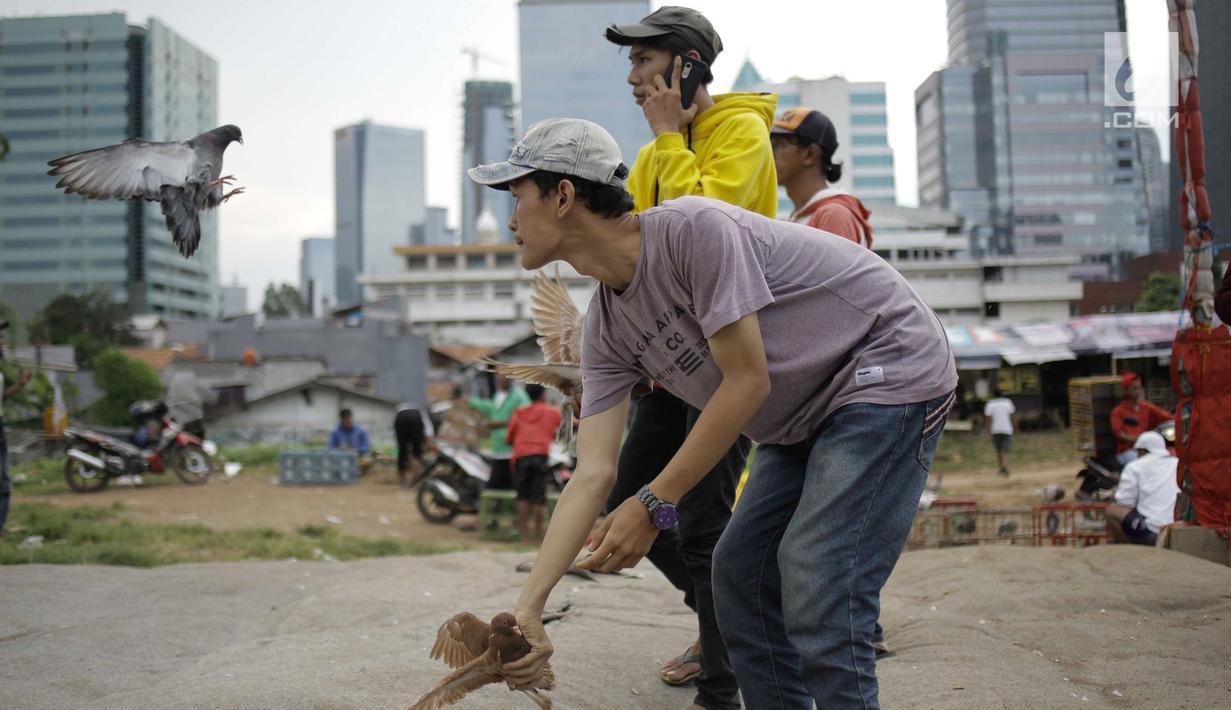 Warga melatih merpati kolongan di kawasan Menteng Pulo Jakarta, Minggu (4/3). Mereka memanfaatkan lahan kosong diantara gedung-gedung di ibukota Jakarta. (Liputan6.com/Faizal Fanani)