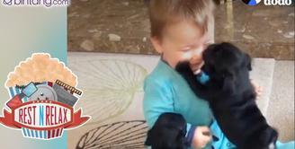 Lucunya Kedekatan Antara Anjing dengan Bayi