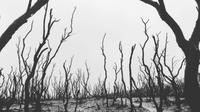 Hutan mati di Gunung Papandayan. Sumber: Liputan6.com/Unoviana Kartika