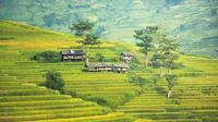 Pertanian di pedesaan Bali. (Bola.com/Pixabay)