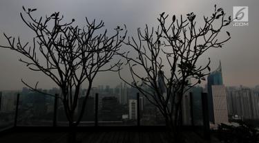 Pohon terlihat saat kabut polusi menyelimuti kota Jakarta, Selasa (9/7/2019). Berdasarkan data Dinas Lingkungan Hidup DKI Jakarta penyebab polusi di Jakarta semakin buruk akibat emisi kendaraan bermotor yang mencapai 75 persen, ditambah pencemaran dari industri dan limbah. (Liputan6.com/Johan Tallo)