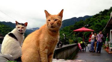 Populasi besar kucing liar yang membuat desa Huotong di Taiwan utara terbebas dari jerat kebangkrutan (AP/Wally Santana)