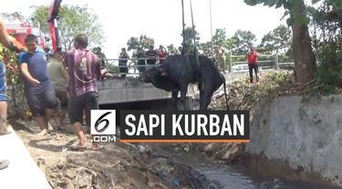 Seekor sapi kurban kabur saat akan dipotong. Sapi kabur dan masuk ke dalam sungai. Petugas Damkar Surabaya mengevakuasi sapi menggunakan crane. Usai evakuasi panitia kurban langsung memotong sapi di tempat.
